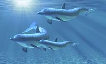Wall mural - Dolphin Family of Three