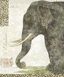 Canvas print - L Elephant