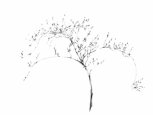 Canvas print - Graphite Twig
