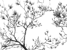 Canvas print - Magnolia Sketch