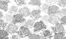 Wall mural - My Grey Roses