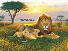 Fototapet - Kings of the Serengeti
