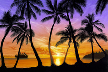 Fototapet - Palm Beach Sundown