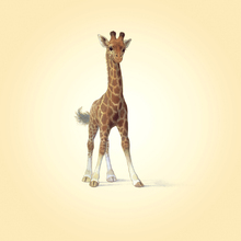 Canvas print - Giraffe Calf