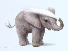 Wall mural - Elephant Calf Washing