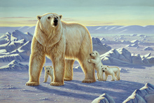 Canvas print - Polar Bear with Cubs
