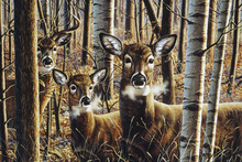 Canvas print - Whitetails for Bradford