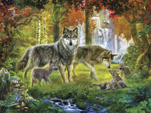 Wall Mural - Summer Wolf Family