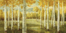 Canvas print - Aspen Birches