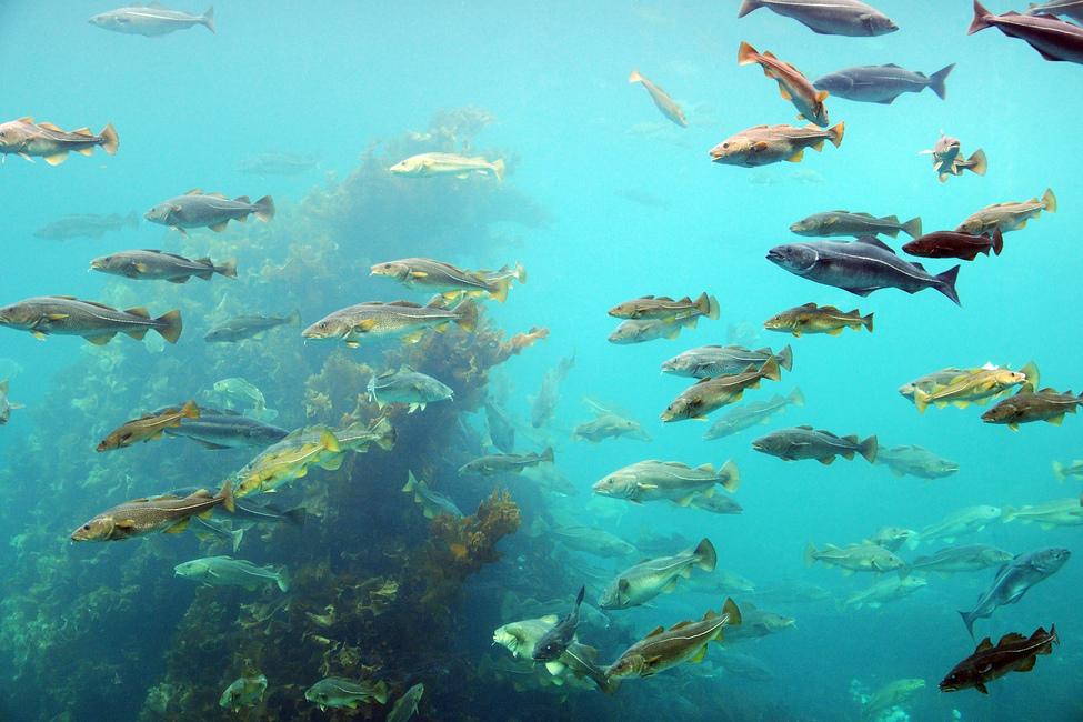 circling fish wall mural amp photo wallpaper photowall wall mural coral and fish coral fish pixersize com