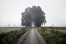 Wall mural - Misty Road