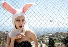 Wall mural - Fashion Rabbit