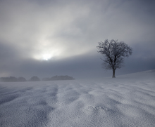 Fototapet - Winter Impression