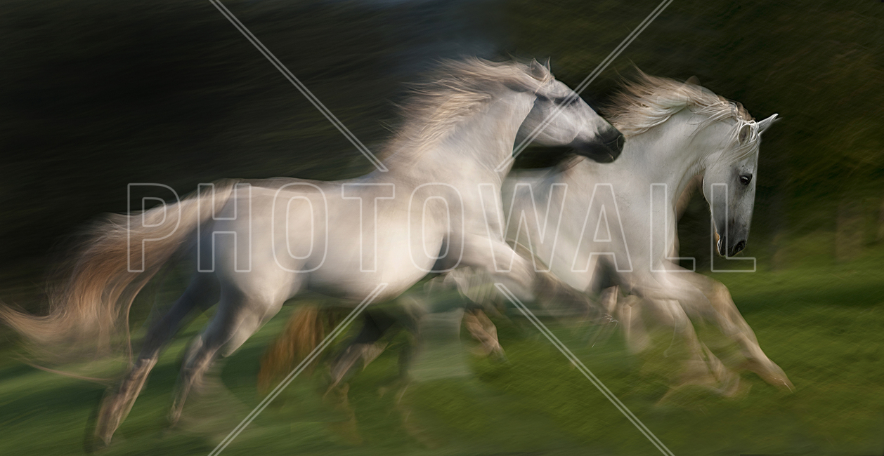 White Horses Gallop