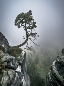 Fotobehang - Tree on Mountain