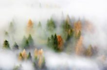 Wall mural - Misty Autumn