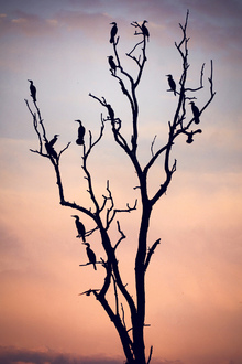 Canvastavla - Birds Before Sunset