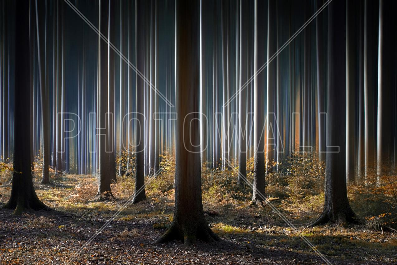 mystic woods wall mural photo wallpaper photowall