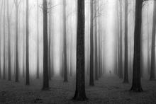Fototapet - Fog & Trees