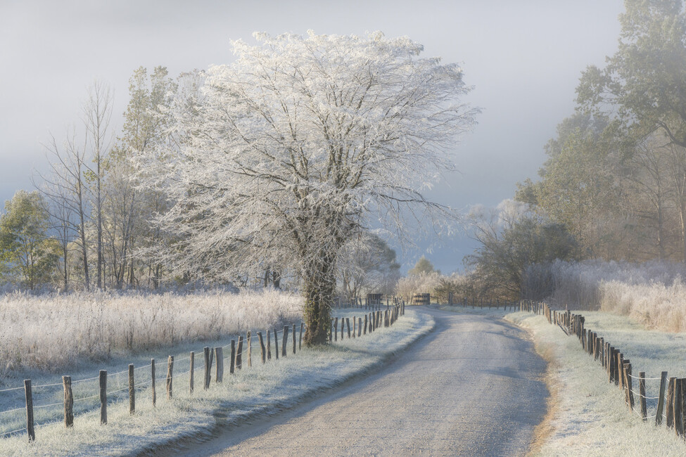 Frosty Morning Wall Mural Amp Photo Wallpaper Photowall