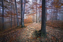Canvas print - Autumn Forest