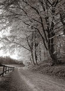 Fototapet - Country Road