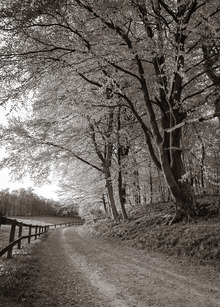 Fototapet - Country Road