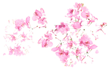 Wall mural - Pink Floral flow