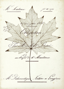 Canvas print - Maple Document