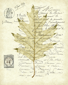 Canvas print - Red Oak Document