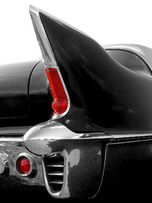 Canvas print - Black Tailfin