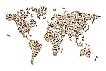 Mural de pared - Cats World Map