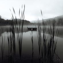 Fototapet - Carla Kimball - Through the Reeds at Dawn Crop