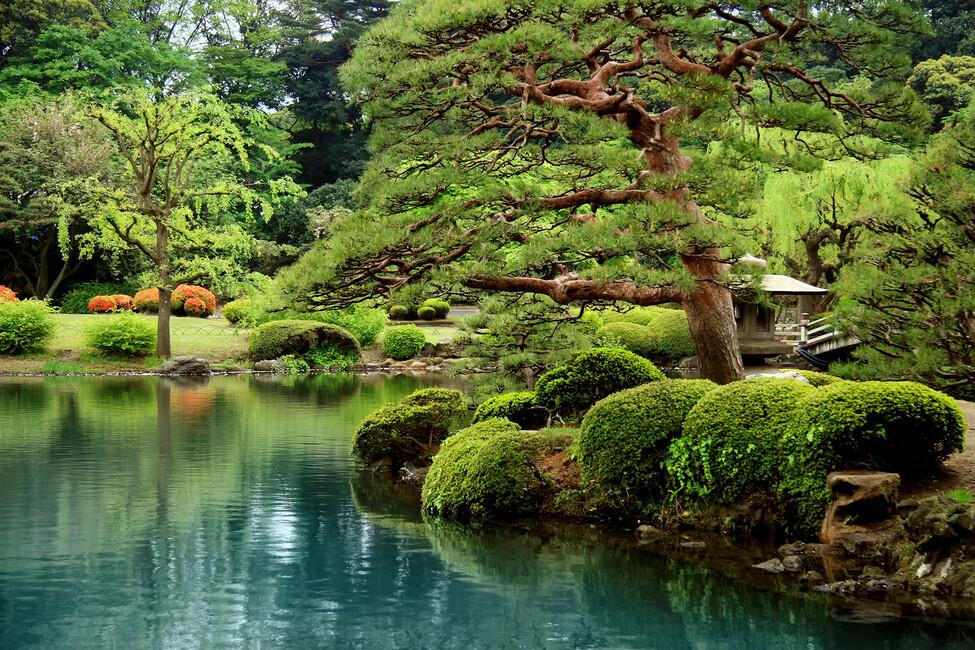 Calm zen lake and bonsai trees in tokyo garden wall for Jardin oriental