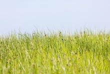 Fototapet - Green Summer Meadow