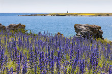 Fototapet - Gotland Summer Landscape