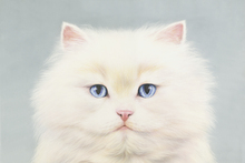 Fototapete - White Persian
