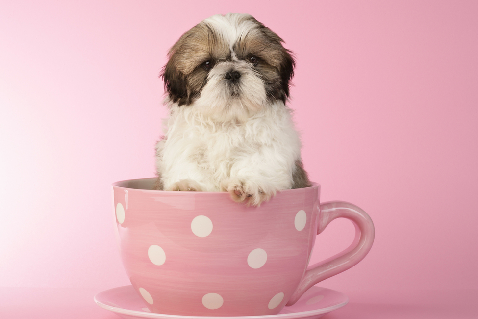 Dog In Cup Wall Mural Amp Photo Wallpaper Photowall