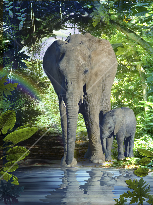 Elephant mother wall mural photo wallpaper photowall for Elephant wall mural