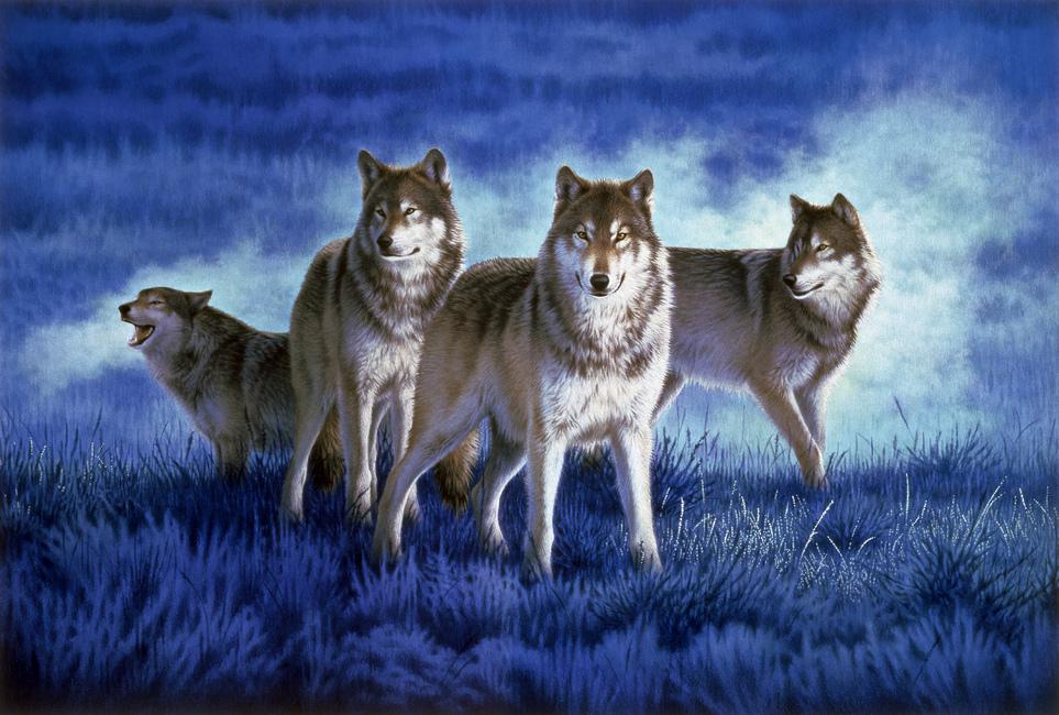 Wolves Wall Mural Amp Photo Wallpaper Photowall