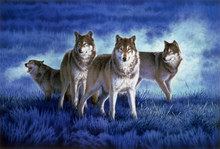 Canvas print - Wolves