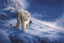 Canvas print - Snow Leopard