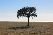 Fototapet - Lonely Tree on Gotland