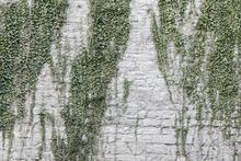 Fototapet - Foliage