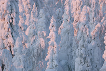 Canvastavla - Lapland Winter Landscape