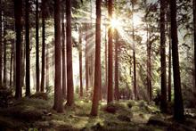 Wall mural - Sunbeam Through Trees - Retro
