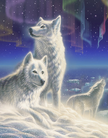 Canvas print - Artic Wolves