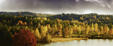 Canvas print - Autumn colored Landscape in Sweden