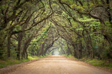 Fototapet - Oak Tree Road