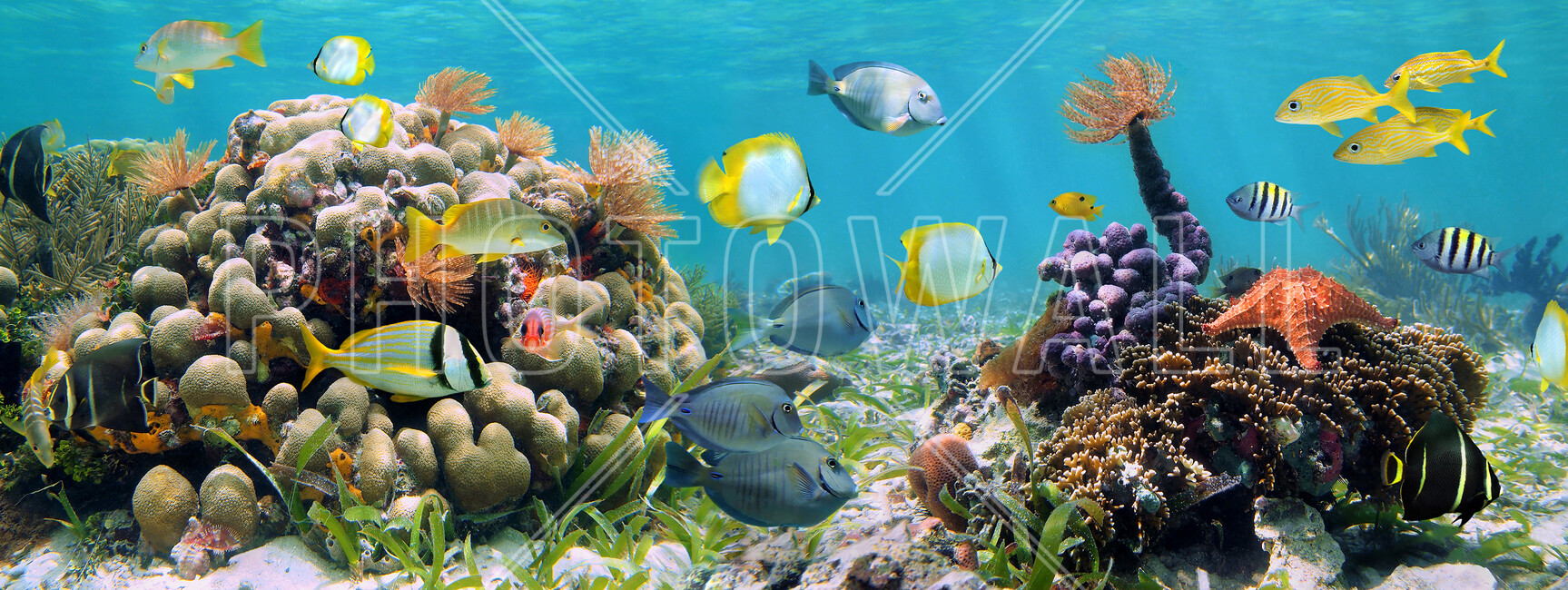 Panorama coral reef wall mural photo wallpaper photowall for Coral reef mural